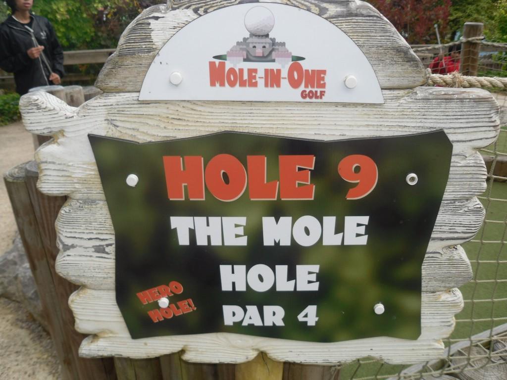Moles in Holes | Novel Games