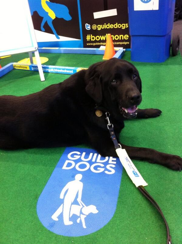 Conservative Party Conference Stabd 51 - Guide Dogs Campaigns