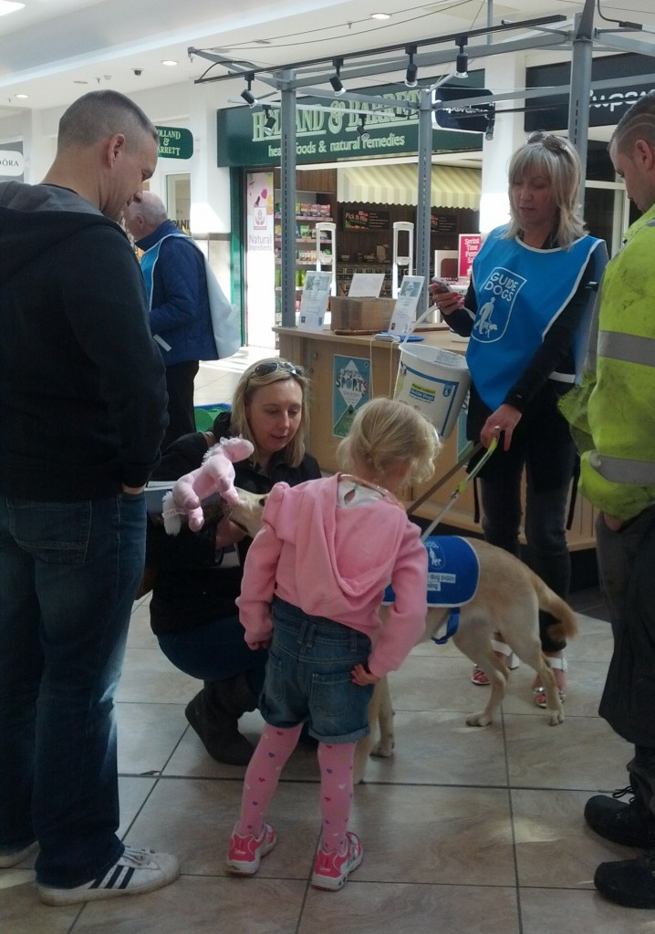 Elsa the Guide Dog puppy lapping up the attention