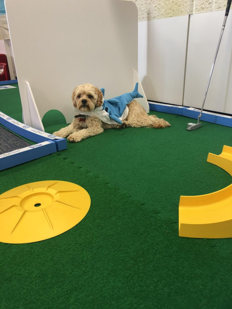 dog on mini golf course