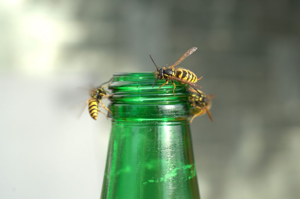 wasps plague picnic